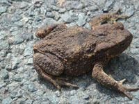 Original picture of a toad